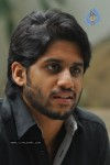 Naga Chaitanya Photos - 42 of 44