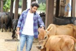 Brindavanam Movie Stills - 13 of 28