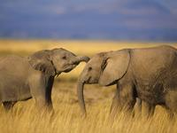 Tragic death of  two elephants