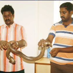 Forest Department arrested two snake-smugglers...