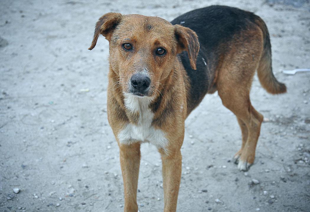 Stray Dog Barking at Vakeel Saab