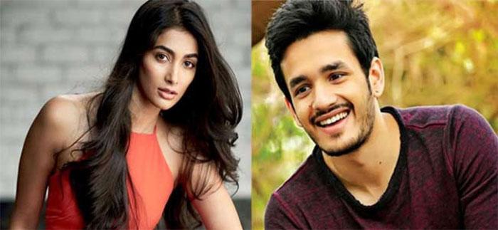 pooja hegde,akhil akkineni,next film,heroine  అఖిల్ నెక్ట్స్ హీరోయిన్ ఈ భామేనా?