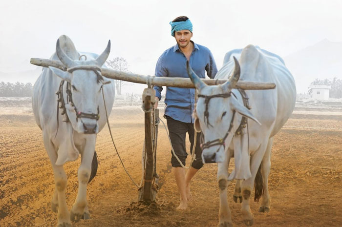 mahesh babu,maharshi,monday test,super star mahesh babu  'మహర్షి' లెక్కేంటో తేలిపోతుంది