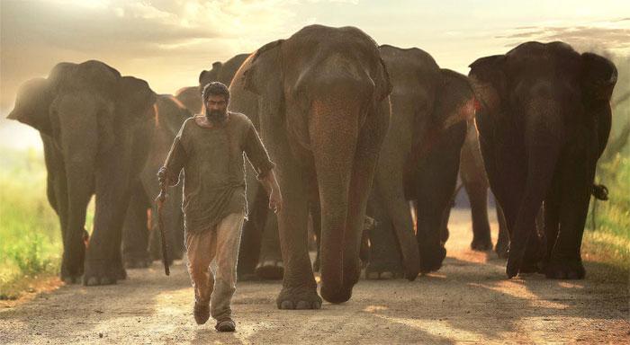 rana daggubati,lose,30 kgs,weight,aranya movie  'అరణ్య' కోసం రానా ఎంత తగ్గాడో తెలుసా!