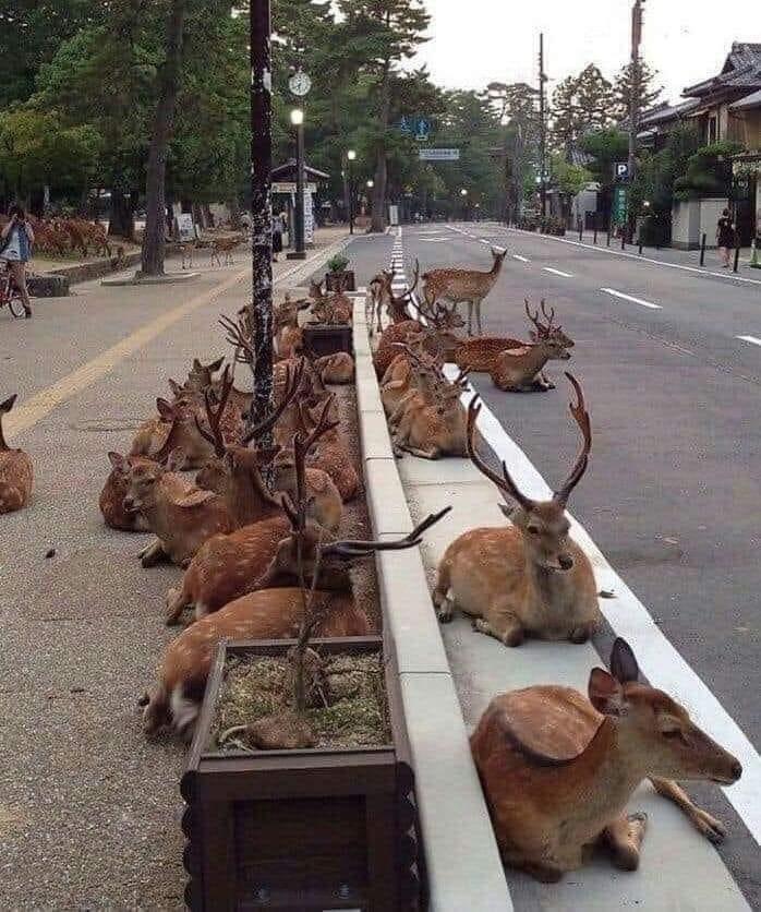 puri jagannadh,deers,corona virus,total lockdown,covid 19,planet  ఈ భూమి మనది మాత్రమే కాదు.. పూరి జగన్నాథ్..